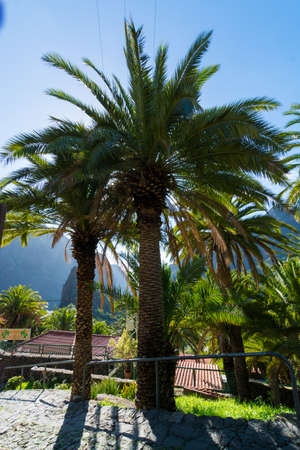 Nature in Masca Village, Tenerife - palm trees and mountains