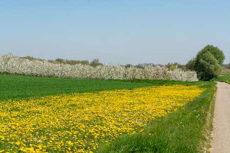 Foto für Spring landscape with fields, orchards and roads in Haspengouw region, Limburg, Belgium in sunny day - Lizenzfreies Bild