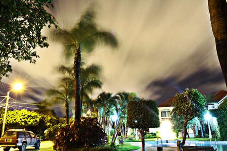 Palmiers soir nuageux