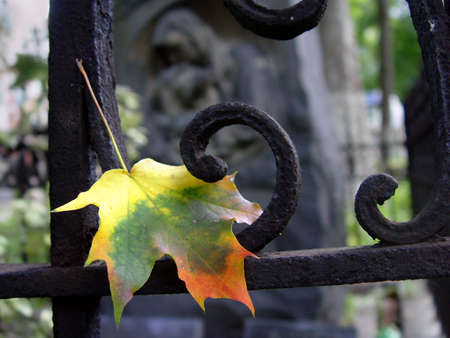 Autumn leaf at the cemetery
