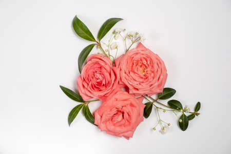 Photo pour floral layout of pink roses isolated on a white background. Top view and copy space - image libre de droit