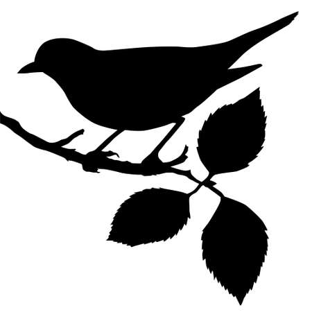Illustration for silhouette of the bird on branch - Royalty Free Image