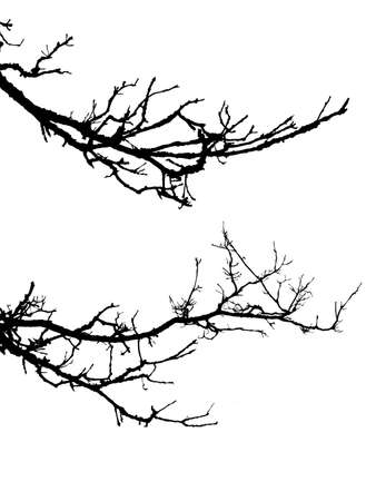 silhouette of the branch tree on white background