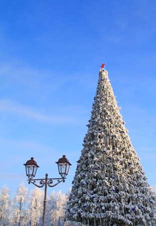 Photo pour fir tree in park - image libre de droit
