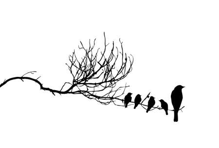 Illustration for vector silhouette of the birds on branch - Royalty Free Image