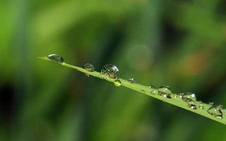 rain dripped on green herb