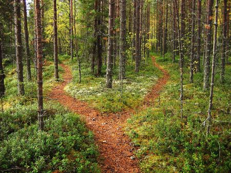 Crossroads in the Karelian forest