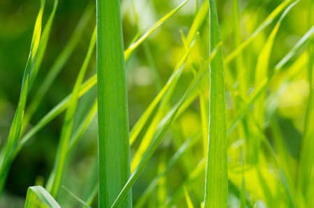 A background with beautiful green grasses. Selective focus.