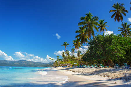 perfect empty Caribbean tropical sandy beach with clear water and green palm treesの写真素材