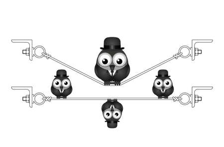 Fat overweight bird on a flexed steel wire isolated on white background