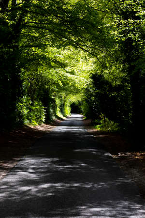 Shaded tree lined single track country lane in rural Hampshire