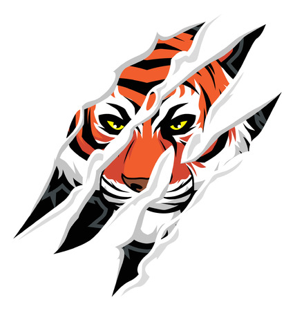Illustration for tiger claw rip mark, with tiger face behind it - Royalty Free Image