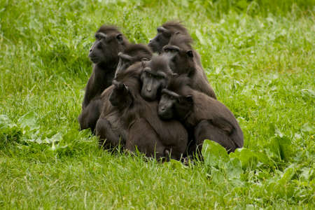 baboons all in a huddle
