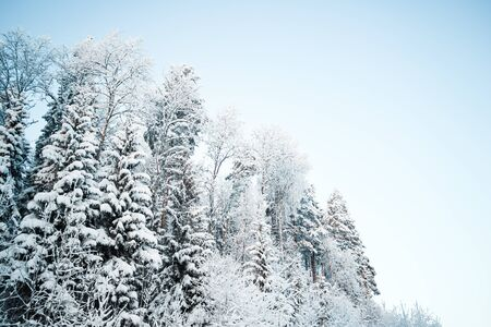 Photo pour Beautiful winter landscape, forest trees, pines and firs covered with snow against the sky - image libre de droit