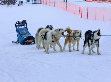 sled used on Nothing man glacier for dog sledders
