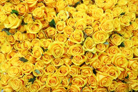 Foto de Flower pattern shot in studio/background/wallpaper - Full shot of yellow roses - Imagen libre de derechos