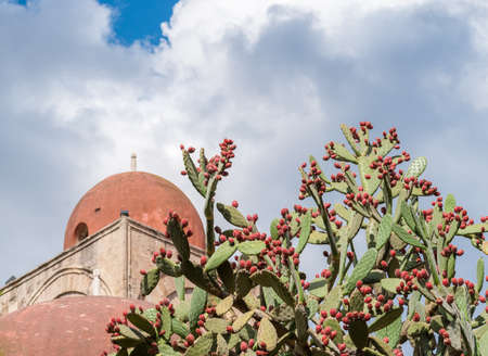 Prickly pears plant with fruits; red dome of a church in background (Palermo, Sicily)
