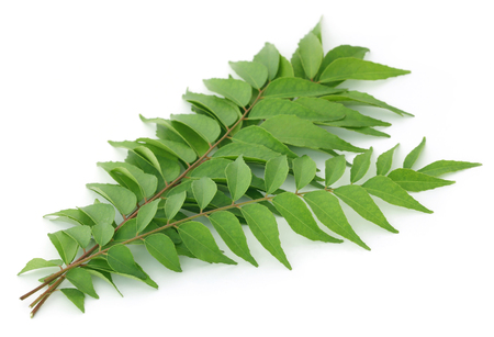 Photo pour Bunch of curry leaves over white background - image libre de droit