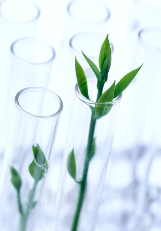Tissue cultured plant in test tube in a lab