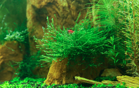 Photo for Underwater landscape of a planted aquarium - Royalty Free Image