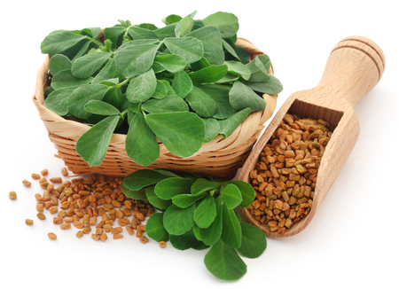 Photo for Fenugreek seeds with green leaves over white - Royalty Free Image