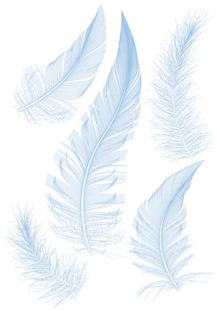 set of smooth blue feather