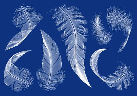 curved flying feathers, set of vector design elements