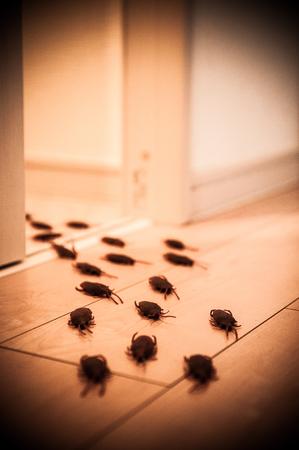 Bee32151101466