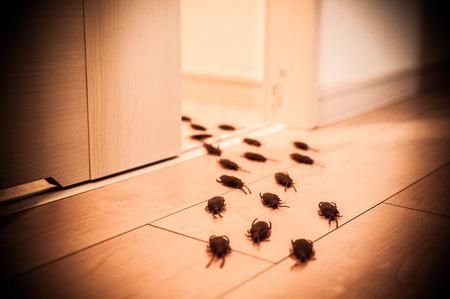 Bee32151101468