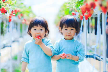 Foto de Kids eat strawberries - Imagen libre de derechos
