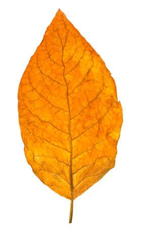 Photo pour dry leaf tobacco closeup on the white background  - image libre de droit
