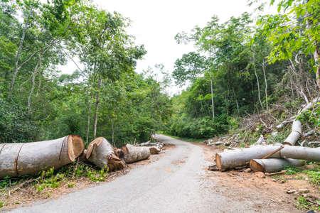 Photo pour Fallen trees cut to clear path for road through tropical rainforest - image libre de droit