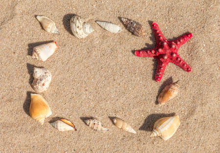 Starfish and sea shells with sand as background