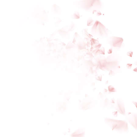 Illustration pour Blossoming sakura - Japanese cherry tree falling petal. Beautiful cherry blossom pink, isolated on white background. EPS 10 vector file included - image libre de droit