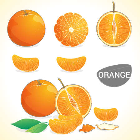 Set of oranges with leaf in various styles
