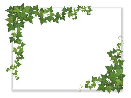white paper sheet decorated hanging ivy