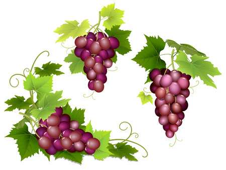 Set of pink bunches of grapes with green leaves.
