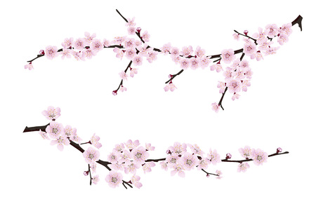 Illustration pour Set of spring blooming tree branches, tree branch with pink flowers. Sakura or cherry. - image libre de droit