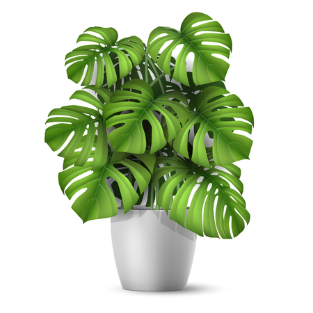 Illustration for Monstera in a pot. Tropical plant for interior decor of home or office. Vector illustration in vector realistic 3d style. - Royalty Free Image
