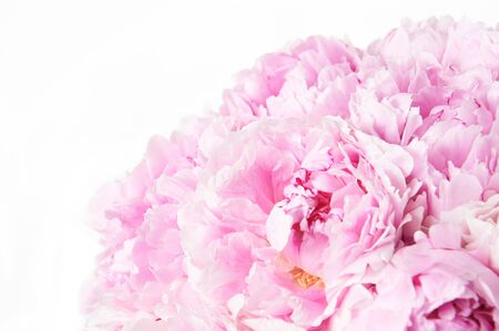 Photo for Background with beautiful bouquet of flowers peonies. Pink peonies on white background, isolated. Design for greeting card or invitation. - Royalty Free Image