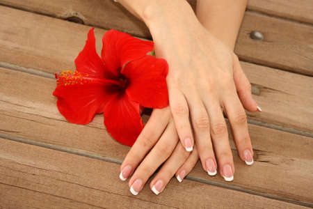 Woman hands with french manicure holding red flower
