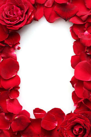 beautiful petals of red roses and roses isolated on white