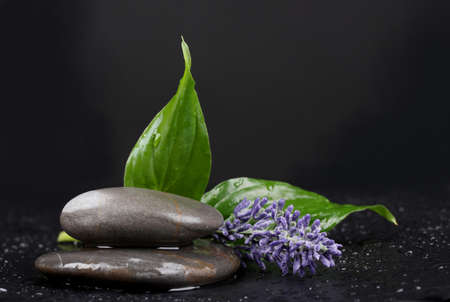 spa stones with water drops, lavender and leaves on black background