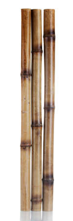 dry bamboo sticks isolated on white