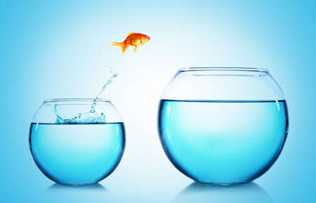 Photo for Goldfish jumping from glass aquarium,on blue background - Royalty Free Image