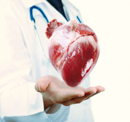 Medical concept. Male doctor with real heart in hands.