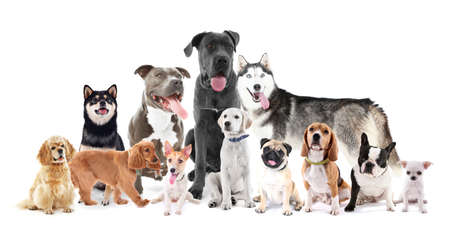 Group of different breed dogs sitting in front, isolated on white