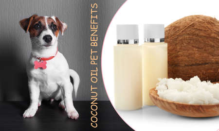 Pet care concept. Collage with puppy and coconut oil