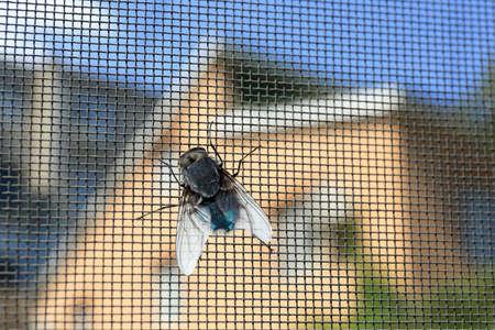 Photo pour Fly on window screen, closeup - image libre de droit