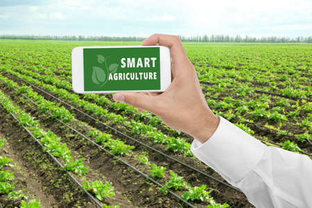 Man with smartphone and potato field on background. Concept of smart agriculture